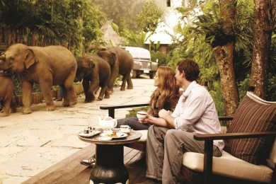 655358-thailand-by-four-seasons-couple-watching-passing-elephants-four-seasons-tented-camp-resort