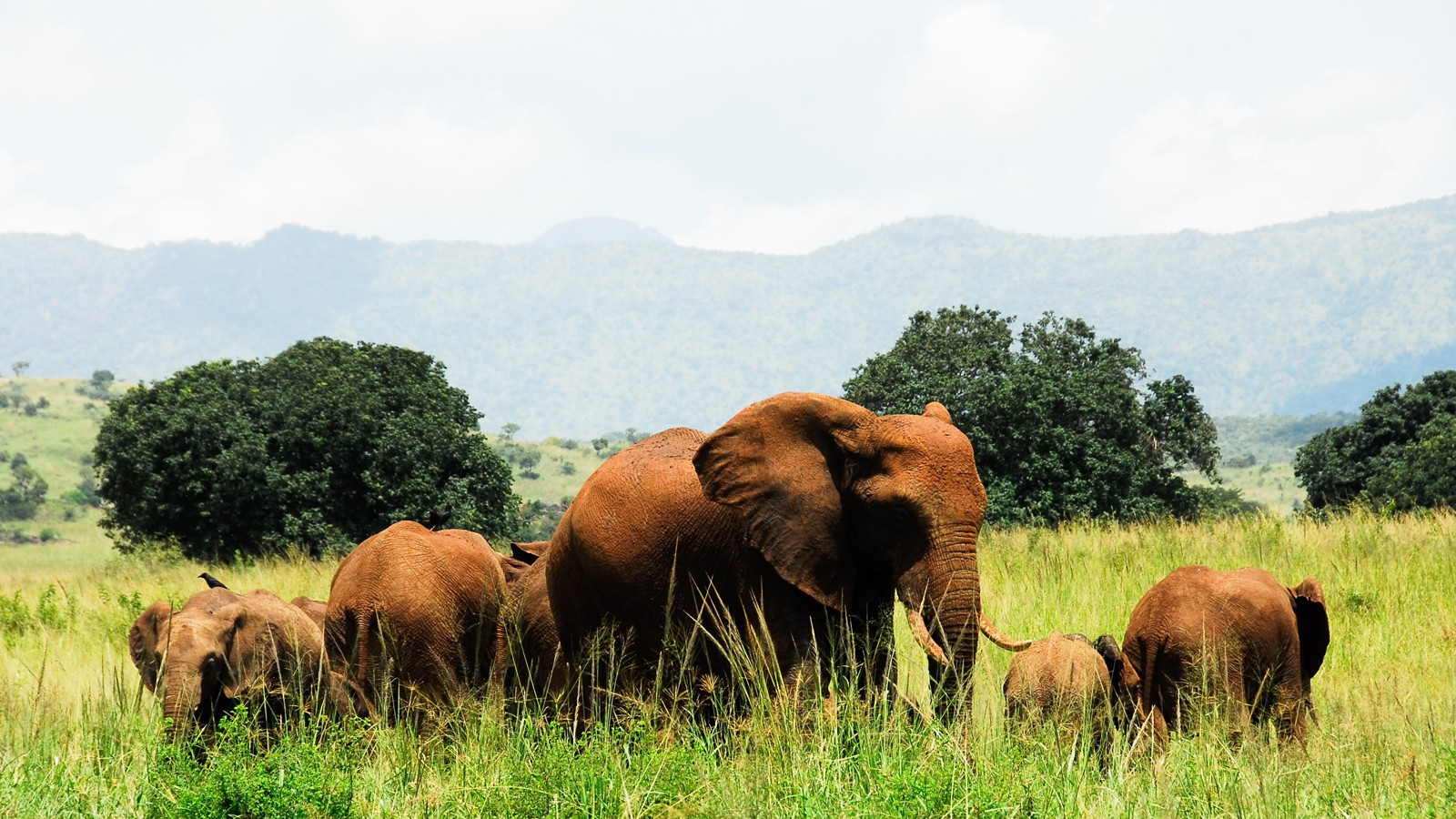 Herd of elephants, Kidepo Valley National Park (Uganda)