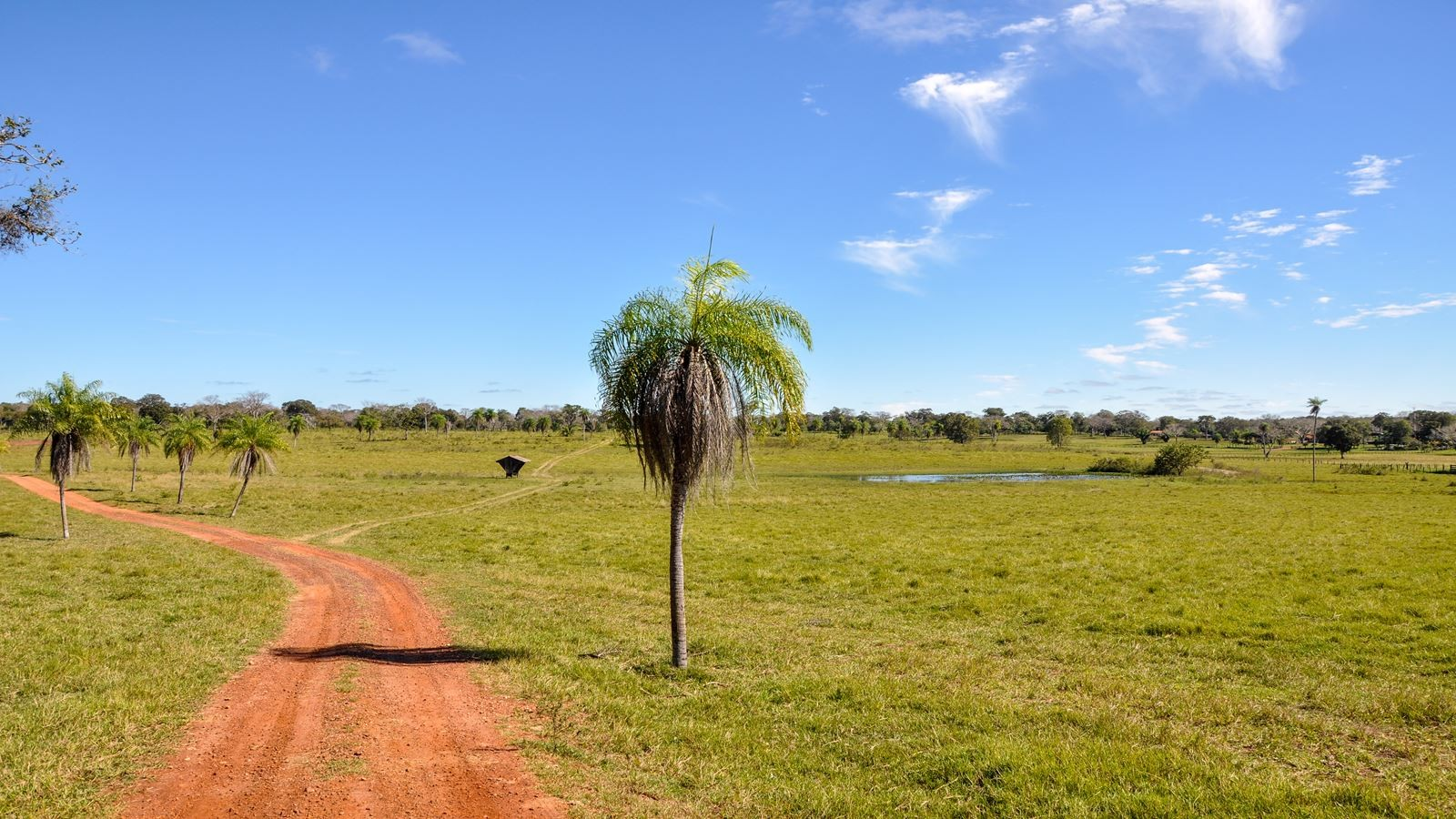 Farm in Pantanal, Mato Grosso (Brazil)
