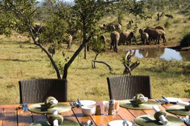 ROYAL MADIKWE SAFARI LODGE (1)