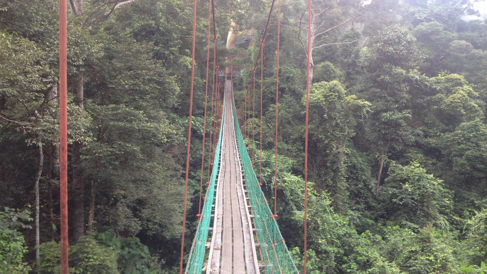 Danum Valley 1